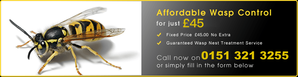 St Helens Wasp Treatment Services
